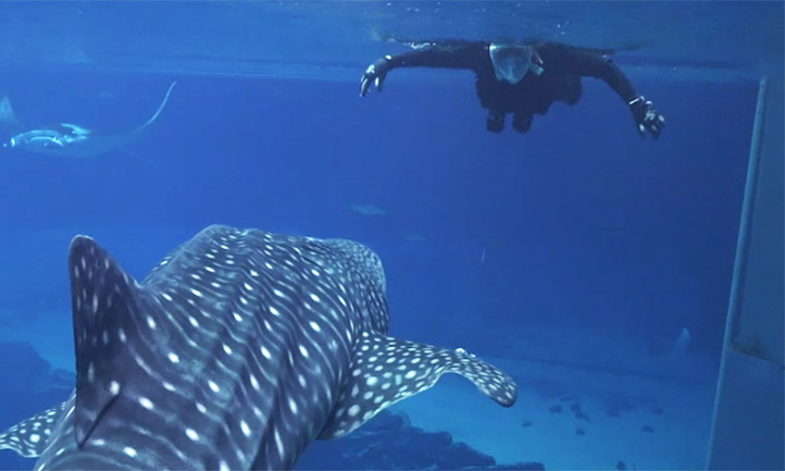 Survivor swims with a whale shark