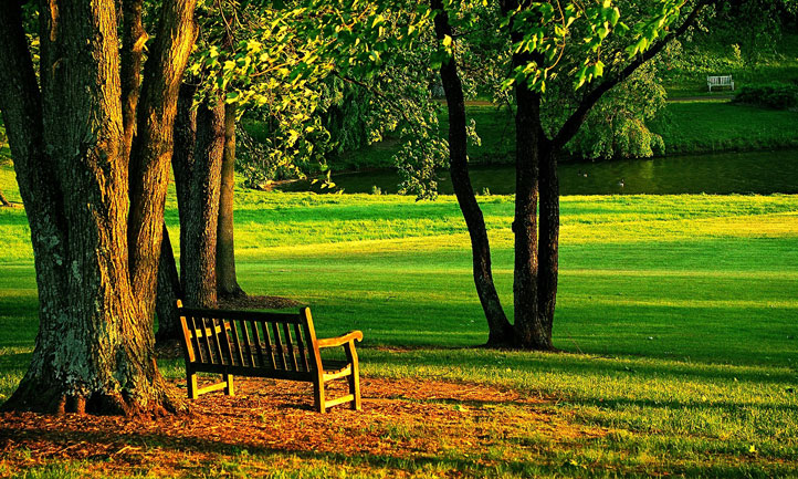 Park Bench Trees