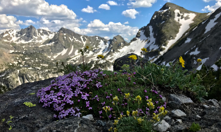 A mountaintop with flowers