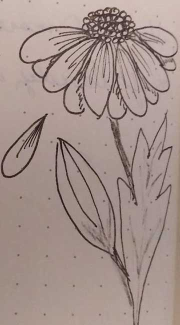 sketch of flower by Lydia